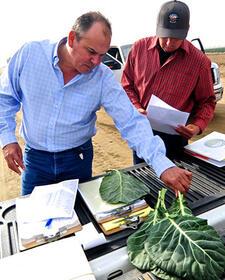 Joe Pulido, General Manager of Organic Harvesting, Grimmway