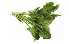 Flat Leaf Spinach