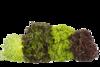 Lettuce & Green Salads
