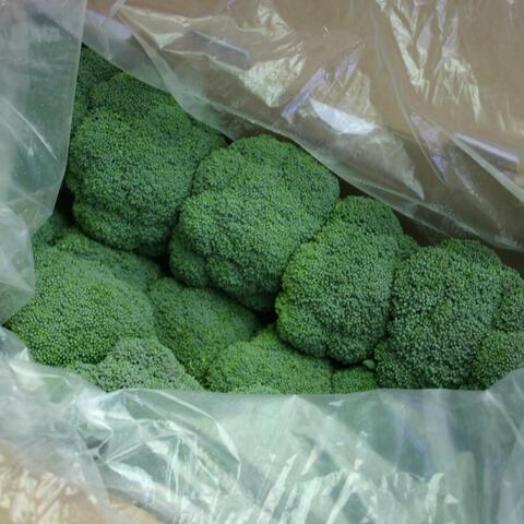 Ice-free Broccoli